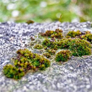 gras drüber wachsen lassen
